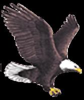 enterprise eagle